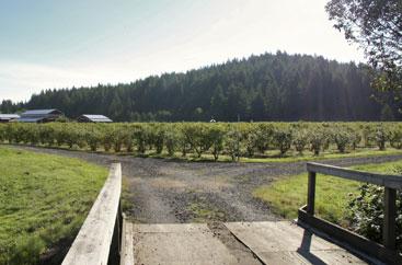farm-to-table-u-pick-paradise