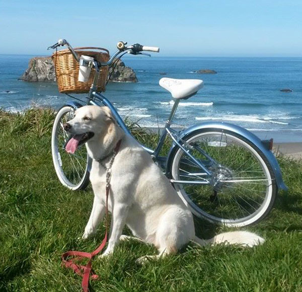 dog and bike on the bluff bandon oregon bowden